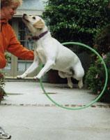 Daisy hula-hoops!